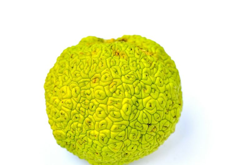 Nature Green Color No People Fruit Fruits ♡ Tastyfood Fruitporn White Background Freshness Food And Drink Fruits And Vegetables Healthy Eating Organic Food Tasty Food Food Porn Fruits Osage Orange Osage Osageorange Strange Fruit Brain Food Maclura Pomifera Maclura Exsortic Fruits