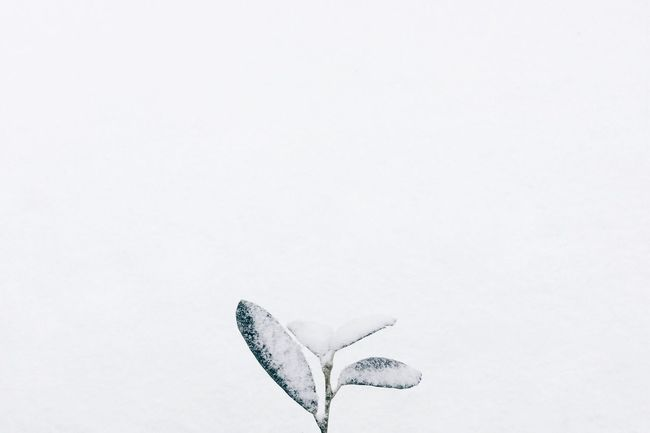 Nature Outdoors Plant snow