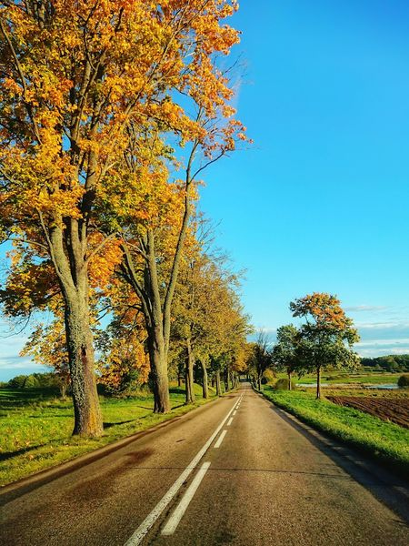 Road The Way Forward Tree Nature Outdoors Day Sky Beauty In Nature Scenics No People Autumn Trees Autumn Leaves Warmia Nature Autumn Colors Beauty In Nature Autumn Polska Poland Landscape Drive Roadway Roadsidephotography Autumn Collection Autumn Leafs