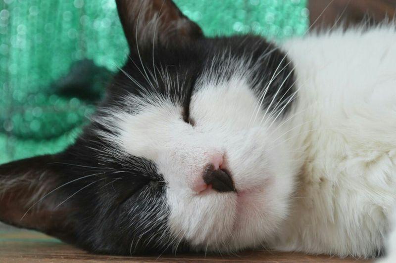 Domestic Cat Pets Domestic Animals One Animal Feline Animal Themes Animal