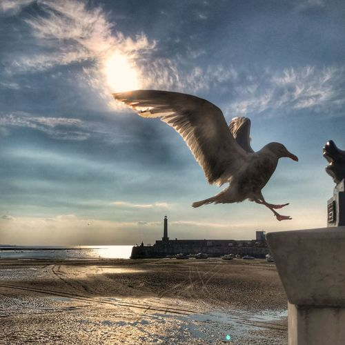 Sea Sky One Animal Animal Themes Cloud - Sky Spread Wings Water Seagull Animals In The Wild Flying Nature Bird Horizon Over Water Outdoors Day No People Mid-air Beach Beauty In Nature Full Length Seaside Beach Life Ocean Margate Margate Beach