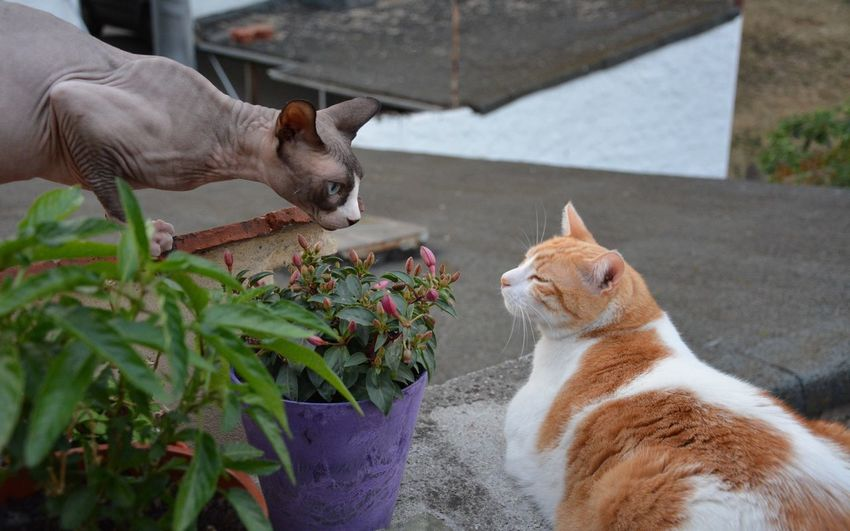 Plants Amidst Cats On Retaining Wall