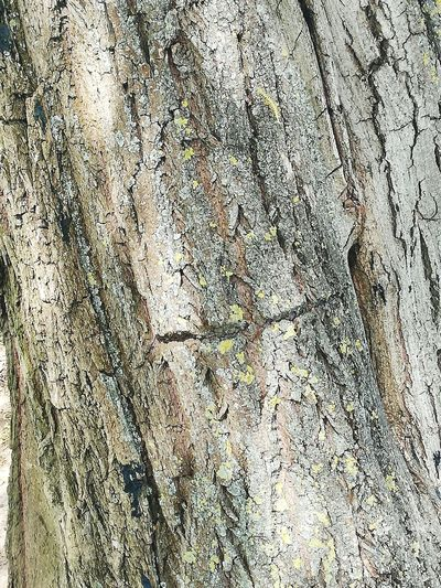 Details Of Nature Detail Of Tree Detail Photography Trees Nature Nature Photography No People Non-urban Scene Tree Backgrounds Full Frame Pattern Close-up Branch Bare Tree