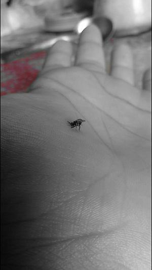 Black Bee Relaxing
