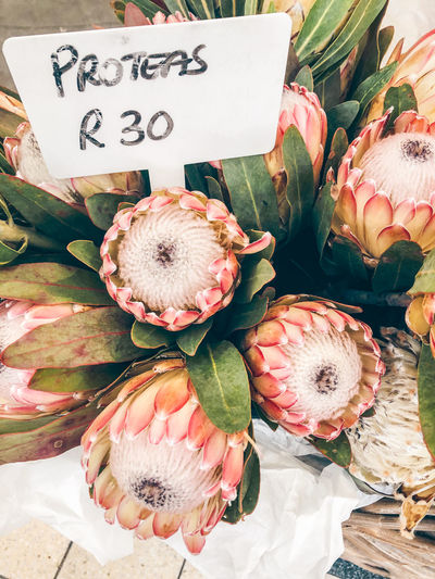 High angle view of protea flowers at market stall