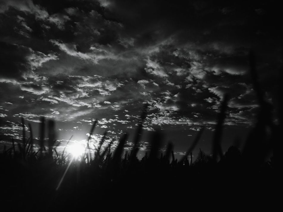 Morning In Mourning Silhouette Morning Sun Macabre Photo Macabre Sunrise_Collection Warhol Inspired Dramatic Sky Sunrise Silhouettes Landscape Silhouette Beauty In Nature Landscape Fall Collection Black And White Collection  Blackandwhite Sunbeam Sunrise Sunrays October Dark Clouds Darkart Cloudscape Grass Autumn Low Angle View The Great Outdoors - 2017 EyeEm Awards Black And White Friday