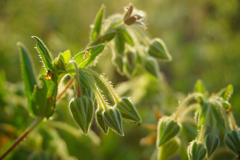 Plant Green Color Growth Close-up Plant Part Leaf Focus On Foreground Nature Beauty In Nature