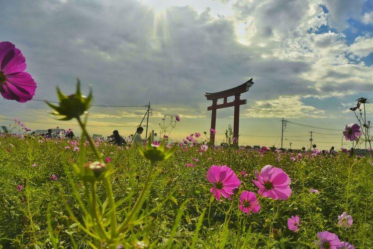 Pink flowers blooming in park against cloudy sky
