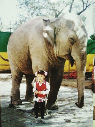童年。 My Childhood Enjoying Life Funny Childhood Outdoors Animal Elephant