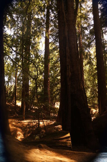 Nature Outdoors Sunlight Tree Tree Trunk