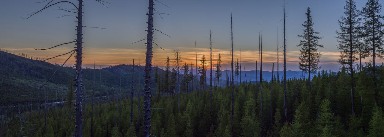 Beauty In Nature Dji Ferry County Forest Mountain Mountain Range Mountains Nature No People Outdoors Scenics Sherman Pass Sky Sunset Tranquility Tree EyeEmNewHere