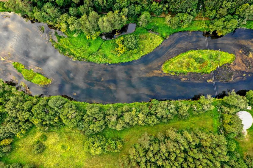 River pattern Green Color Plant High Angle View Growth Water Beauty In Nature Nature No People Tree Day Tranquility Outdoors Scenics - Nature Field Landscape Tranquil Scene Environment Floating On Water