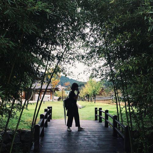 Korea Trip Danyang Tree Lifestyles Walking Day Outdoors Green Color Nature Freshness