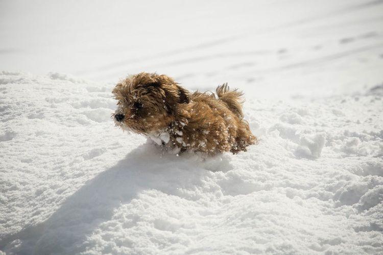snow puppy Puppy Puppy Love PuppyLove Pets Dog Snow White