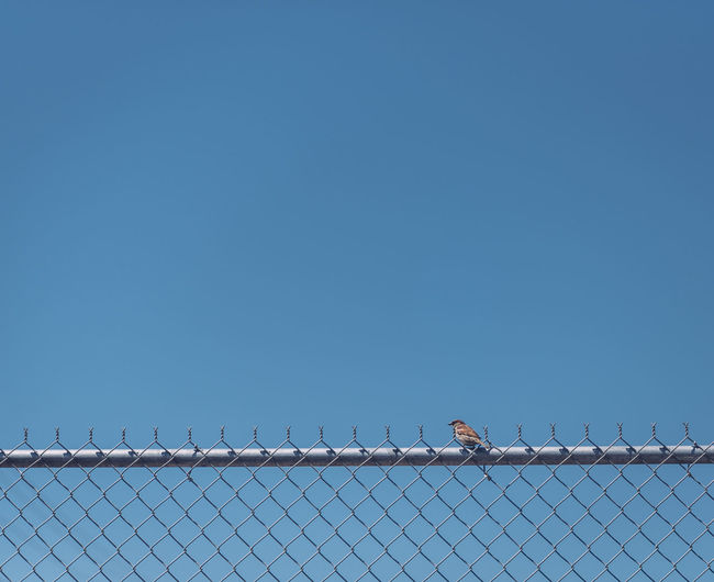 Animal Themes Animals In The Wild Bird Blue Clear Sky Fence Low Angle View Perching Protection Tranquility