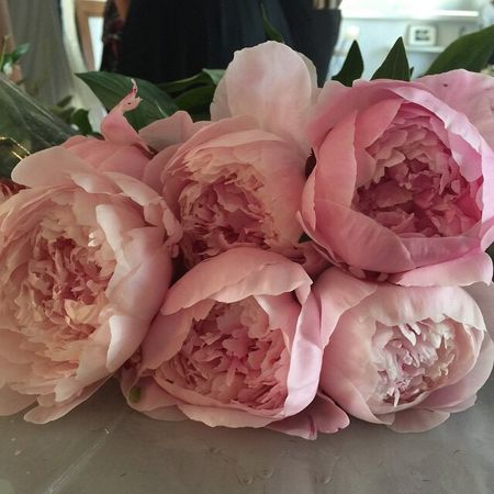 Good morning, world! :) Myfavoriteflowers Mood Flowers Enjoying Life Morning Ilike Pion Pink