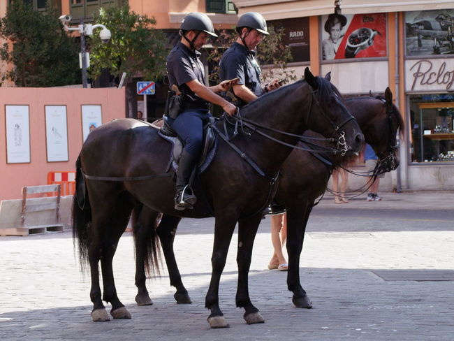 Policemen with Mobile Phones on Horseback, Placa Cort City Composition Looking Down Mallorca Palma Palma De Mallorca SPAIN Square Two Horses Capital City Domestic Animals Full Frame Full Length Horse Horseback Riding Mobile Phones No Incidental People On Duty ! Outdoor Photography Policemen Togetherness Travel Destination Two Men Two Policemen Two Riders