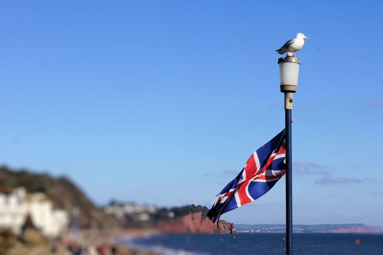 Bird Blue Sky Clear Sky Day Flag Lamppost No People OutdoorsSeagulls Seagulls And Sea Patriotism Seagull Sky Union Flag United Kingdom Water Bird Waterfront Animal Themes Animal Wildlife Sea Live For The Story