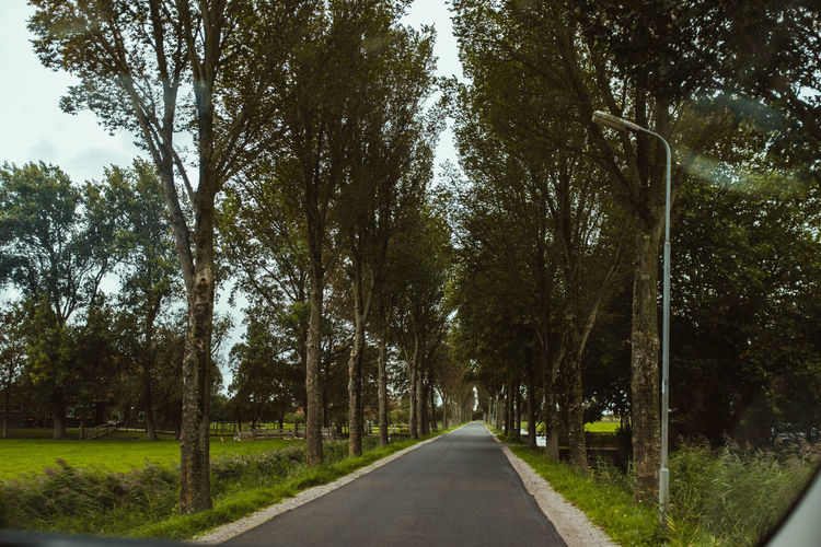 Day Diminishing Perspective Direction Dividing Line Empty Road Green Color Growth Long Marking Nature No People Outdoors Plant Road Sign Street Symbol The Way Forward Transportation Tree Tree Trunk Treelined vanishing point