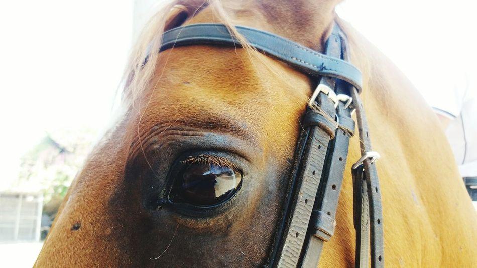 Close-up Horse Horseeye One Animal Cute