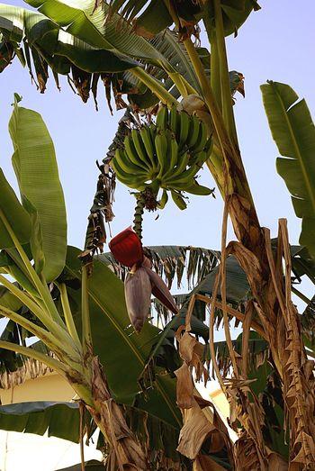 Sardegna😍😍👍👌 Banana Tree Bananaflower Check This Out Eyem Best Shots Street Photography The Photojournalist - 2016 EyeEm Awards Eye4photography  Things I Like Nature Nature Photography Nature_collection Natural Beauty Week On Eyeem EyeEm Best Shots EyeEm Nature Lover