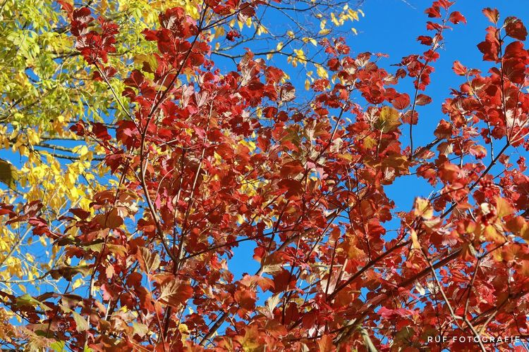 Tree Multi Colored Branch Backgrounds Full Frame Flower Blue Clear Sky Close-up Sky Autumn Mood