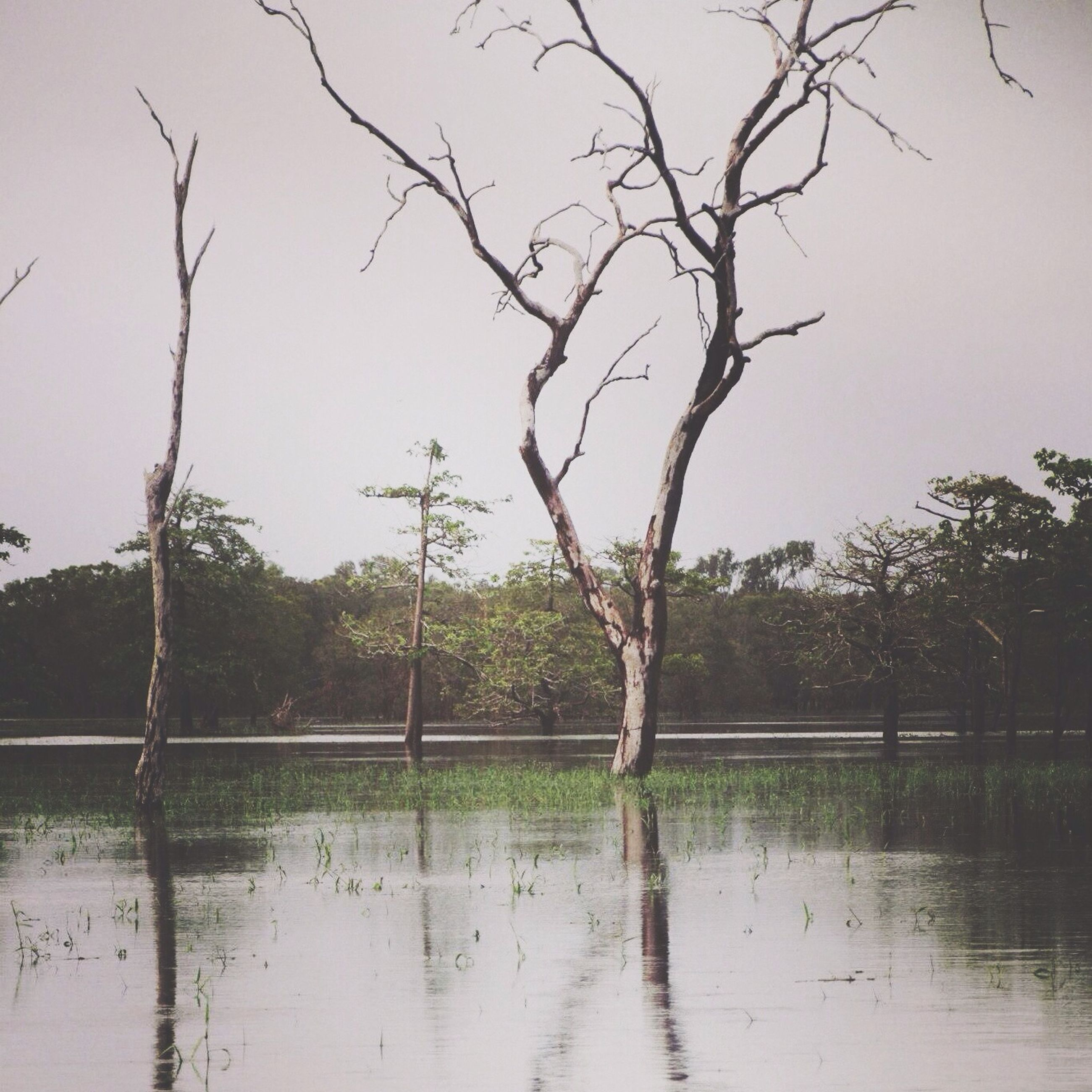 water, tree, bare tree, lake, tranquility, branch, reflection, tranquil scene, nature, waterfront, scenics, beauty in nature, sky, bird, river, pond, day, outdoors, tree trunk, no people