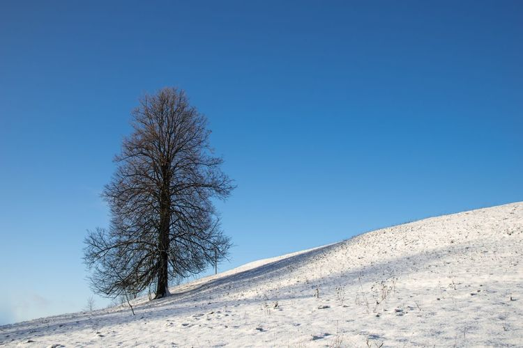 Tree on snow covered land against clear blue sky