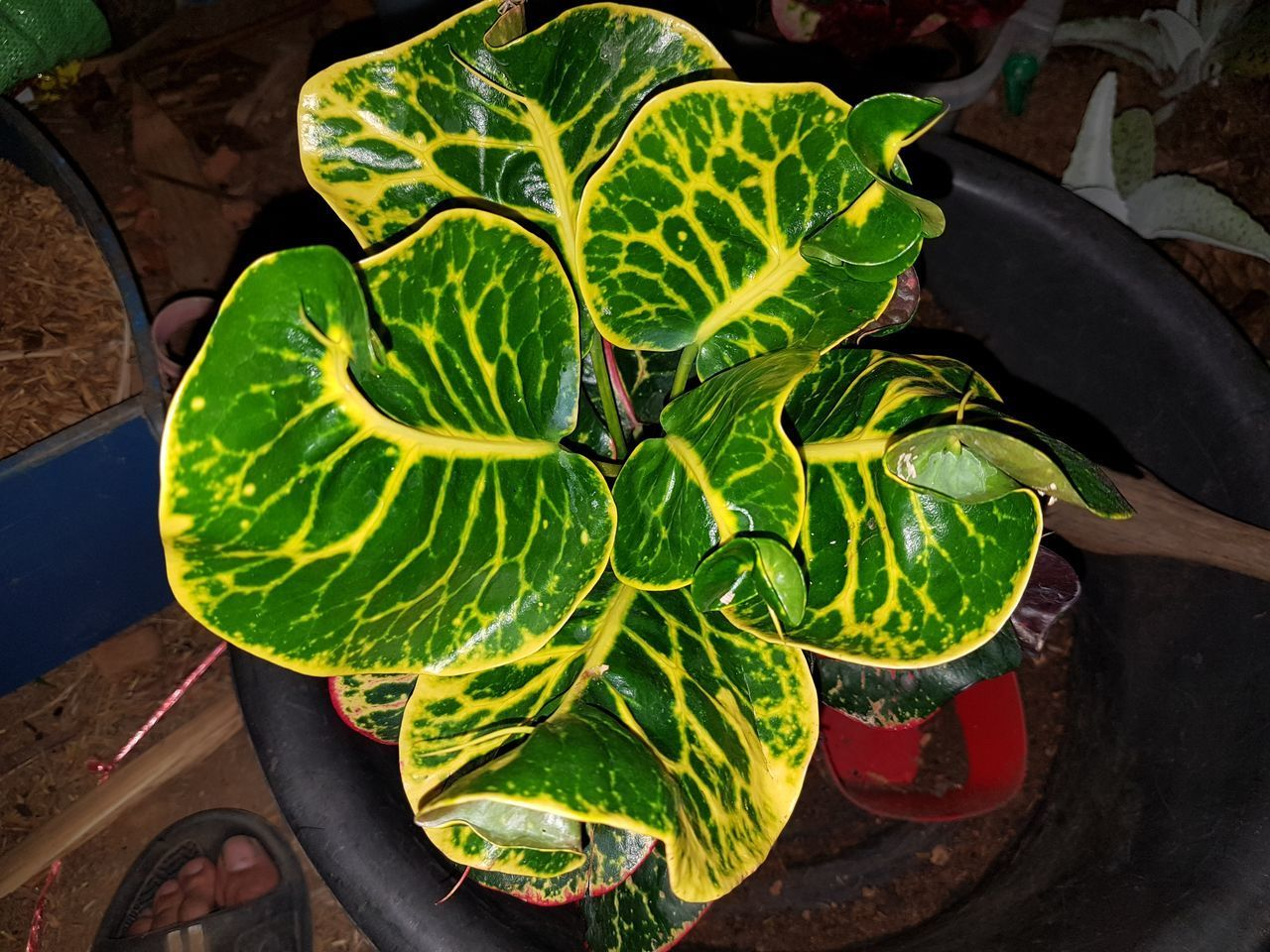 HIGH ANGLE VIEW OF FRESH GREEN LEAVES IN POTTED PLANT