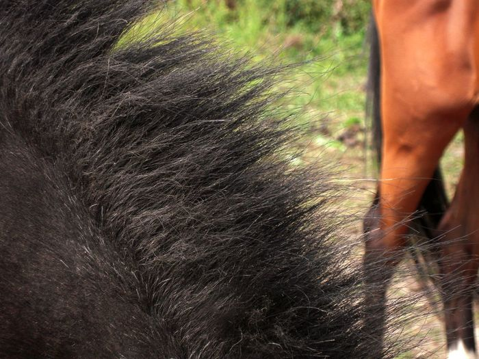 Black horse mane close-up - two horse parts togetherness photography Black Mane Horse Mane Animal Part Horse Part Horses Photography Close-up