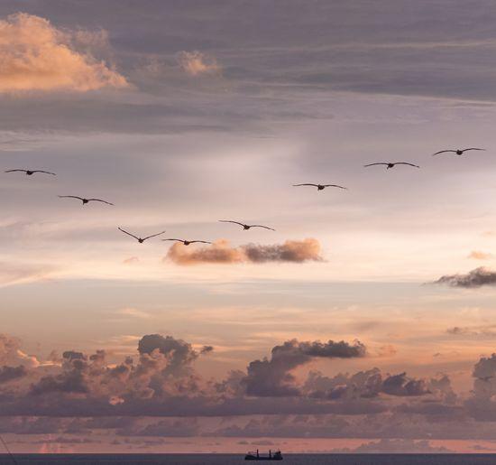 Flock of birds flying in sky during sunset