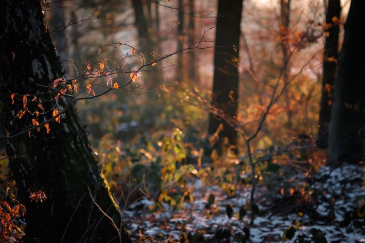 Wintertime Fuji-xe2s Showcase: January Tenebrio.photos Yashica Ml 100mm Nature Forest Leaf Tree Orange Color Branch Change No People Outdoors Beauty In Nature Tranquility Close-up Day