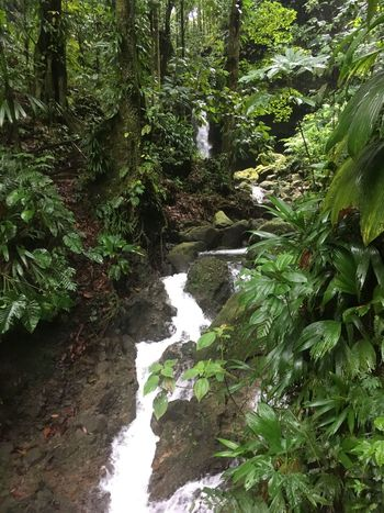 Dominica Beauty In Nature Day Forest Growth Nature No People Outdoors Plant Rock - Object Scenics Tranquility Tree Water Waterfall