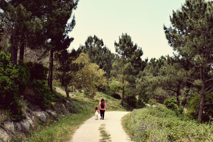 Rear view of mother with daughter walking on footpath amidst trees in forest