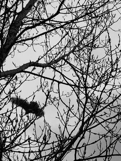 Bird Bird In