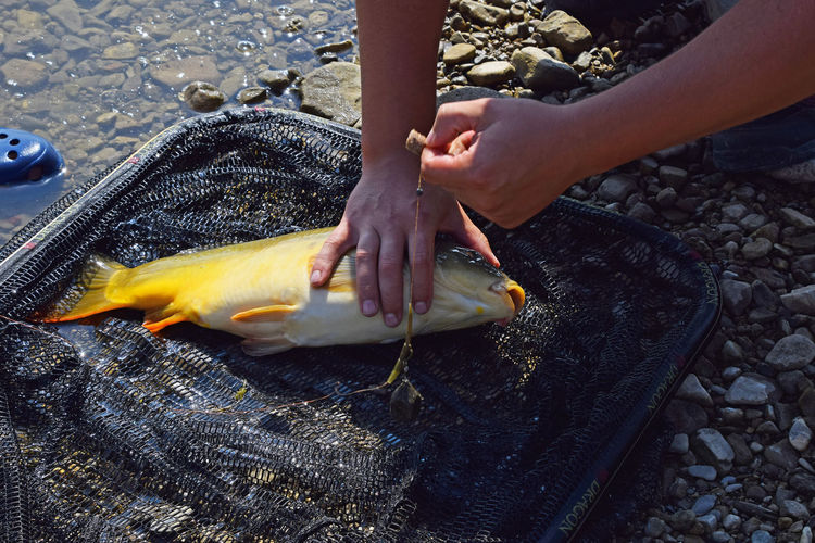 Big European mirror carp fish catch BIG Big Fish Carp Catch Catch Of The Day Day Fish Fishing Goldfish Hands Hobby Holding Leisure Leisure Activity Lifestyles Man Mirror Carp Net One Outdoors Person Shore Success Time Vacations Food Stories