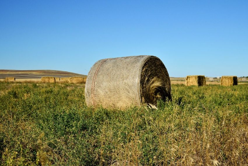 Round and square Outdoors Yellow Color Sunshine Shadow Rural Scene Agriculture Field Hay Bale  Clear Sky Landscape Agricultural Field