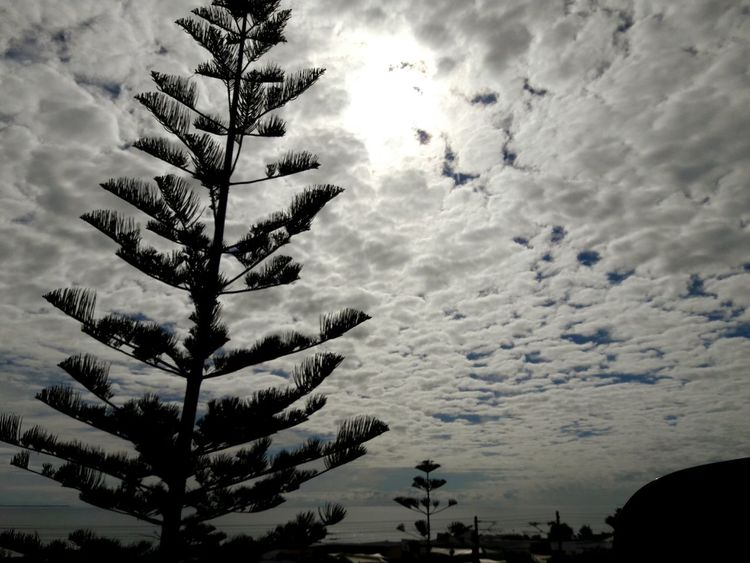 Full of cloud in the sky. Cloud - Sky Cloud Whereisthesky Fullofwhitecloud Peaceful View Sky Beauty In Nature Inperthaustralia Perth Traveltime