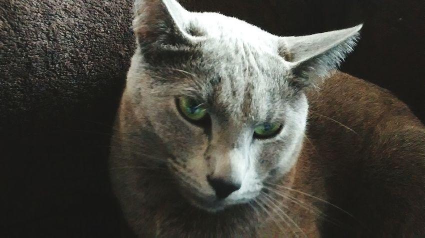 I love cats !!!! Cat♡ Cats Galactus_god