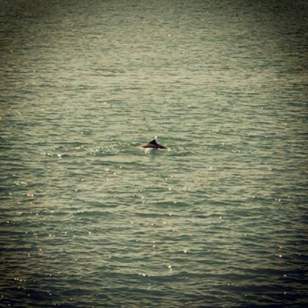 Dolphin spoting...