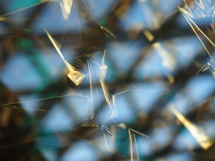 Calm Backgrounds Bird Paper Close-up Day Nature No People Outdoors Peaceful Selective Focus