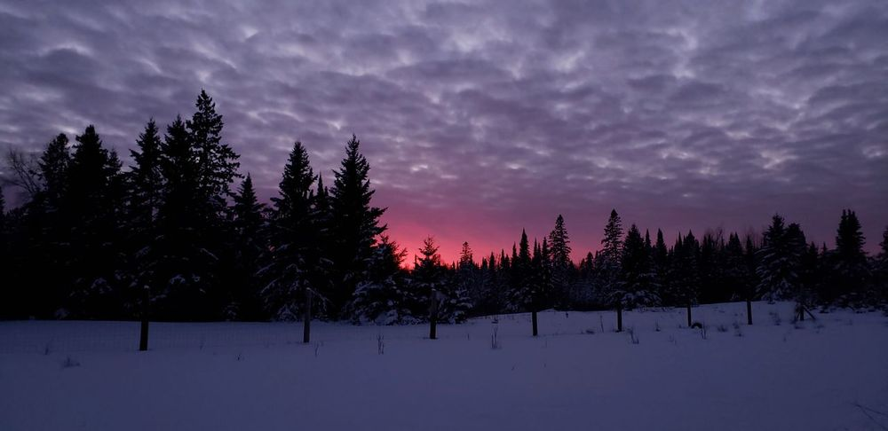 Winter sunset Embarrass, MN. Purple #tree #beautiful #landscape #nature #photography #nature_collection #EyeEmNaturelover #nature #photography #photo #photos #pic #pics #TagsForLikes #picture #pictures #snapshot #art #beautiful #instagood #picoftheday #photooftheday #color #all_shots #exposure #composition #focus #capture #moment #snow #ice #Nature  #naturephotography #nature #love #tree #sky #cool  #naturebeauty #tranquillity #Scenic View #scenic-nature #sky Nature Photography Astronomy Snow Winter Cold Temperature Space Sunset Forest Purple Pine Tree