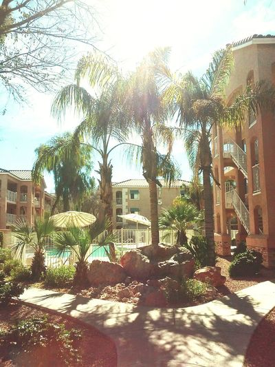 Poolsideview My Piece Of Paradise My Home Is Paradise Happy In Phoenix Palm Trees in Phoenix, Arizona