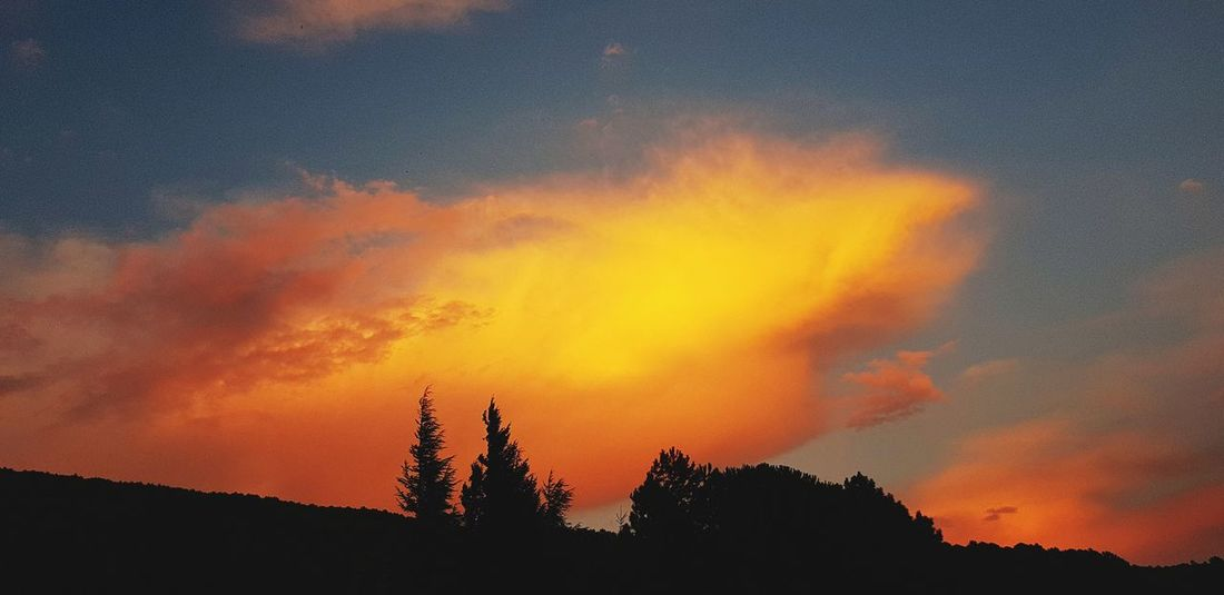 sunset Tree Forest Fire Sunset Silhouette Orange Color Dramatic Sky Sky Fire - Natural Phenomenon Woods Candlelight HUAWEI Photo Award: After Dark A New Beginning