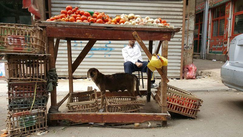 Egypt Vegetables Market Dog Street Seller Fruits Shopping Street Cairo Cairo Egypt égypte