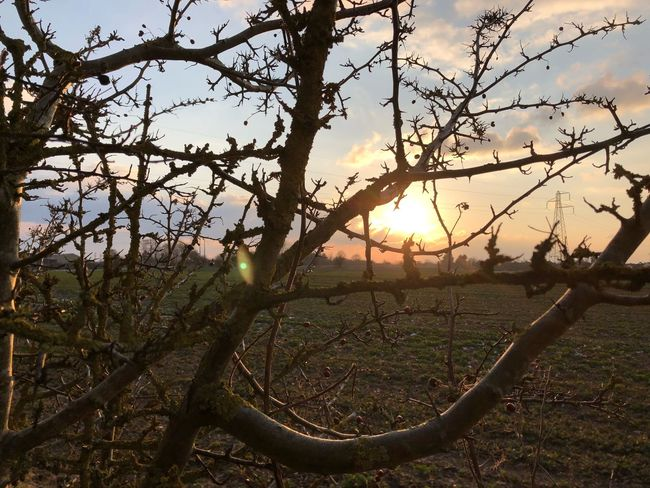 Sun through the thorns Sunset Tree Nature Sunset Outdoors Beauty In Nature Sky No People Scenics Branch Landscape