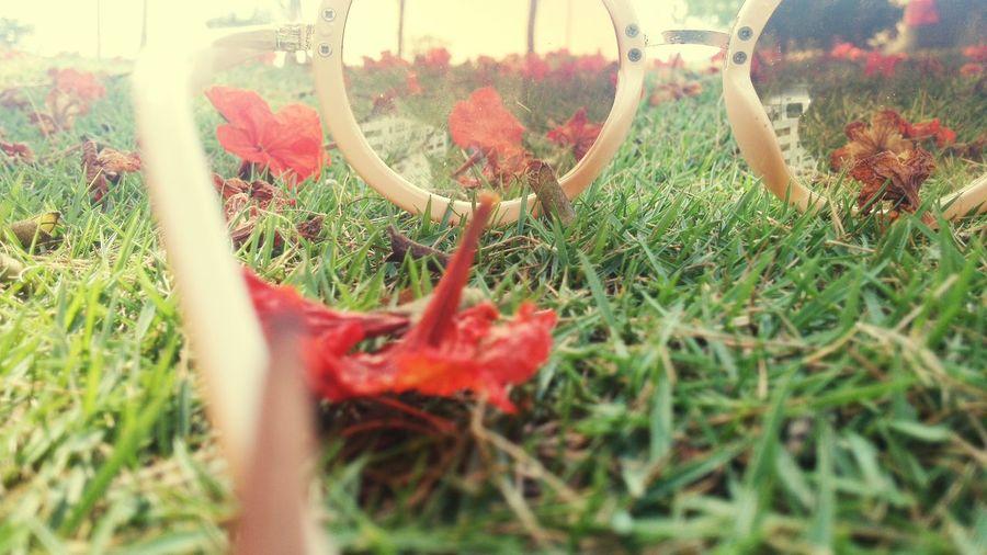 Goodday ♡ Glasses Garden 🌷 Flowers 🌹