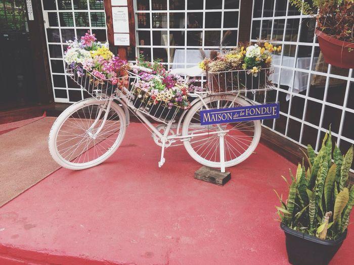 Bicycle Flower