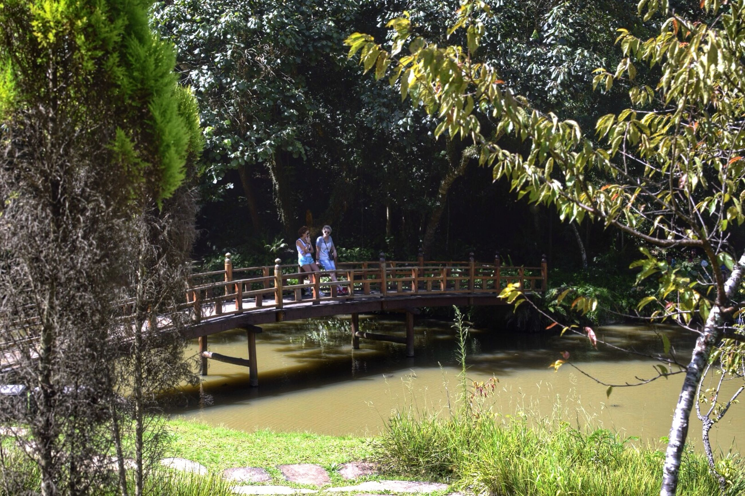 tree, water, growth, bridge - man made structure, plant, railing, green color, park - man made space, nature, footbridge, connection, tranquility, leisure activity, beauty in nature, branch, river, tranquil scene, lifestyles, men