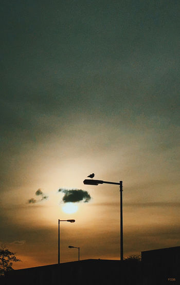 Seagull P.036 Onephotoaday 365project IPhoneography Seagull Lamppost Three Sillhouette Sunset Silhouettes Sunset And Clouds  Sunset